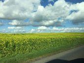 Field in Denmark